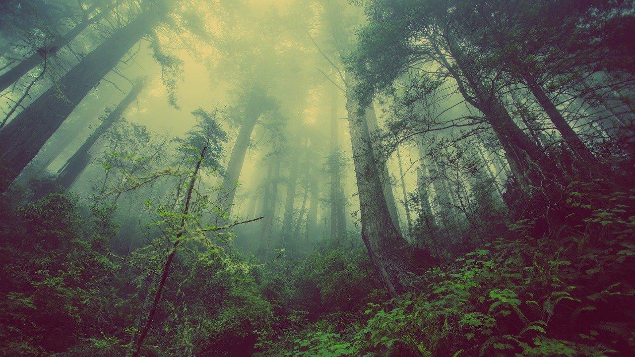 Masiv a ekologie